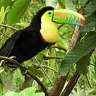 Regenwald -Aufforstung und Erhaltung